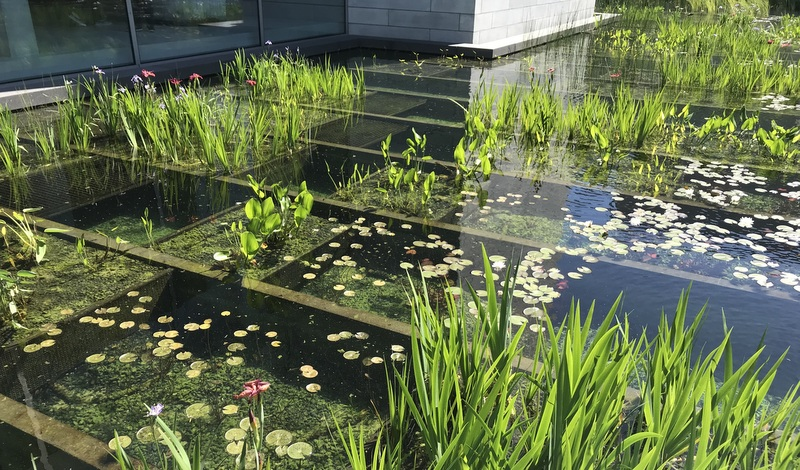 Water Garden at Glenstone in May of 2019