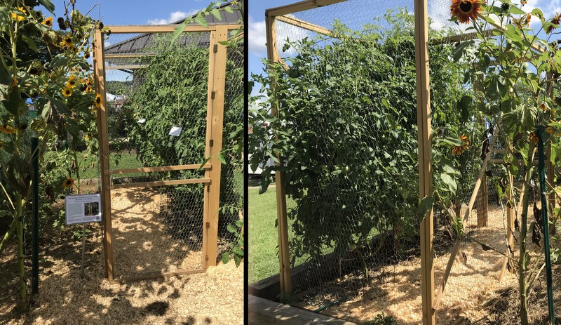 Walk-in Tomato cage at Maryland State Fair