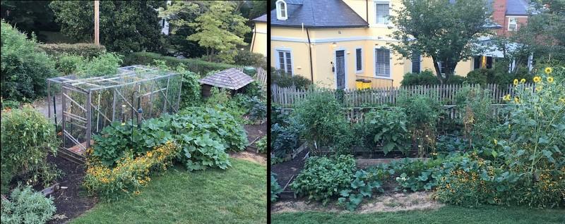 Walk-in Tomato cage in garden of Robert Cook, Baltimore Master Gardener
