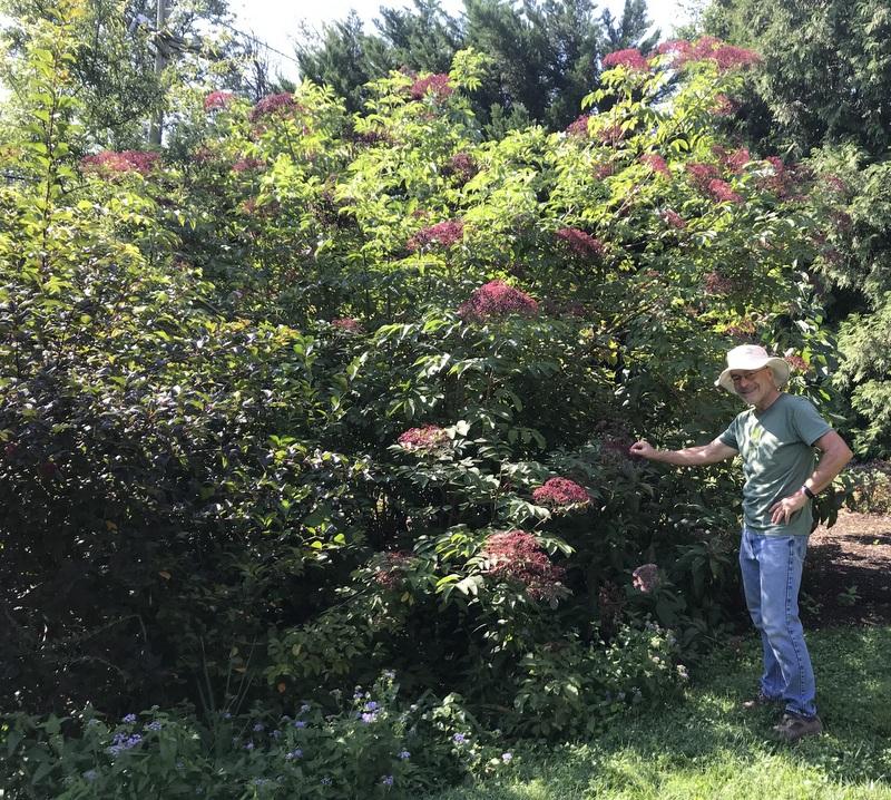 Baltimore Master Gardener Robert Cook in his garden