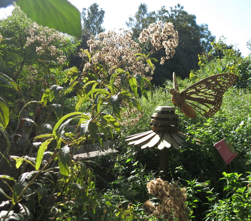 Smithsonian Pollinator Garden at Museum of American History Sept 2019