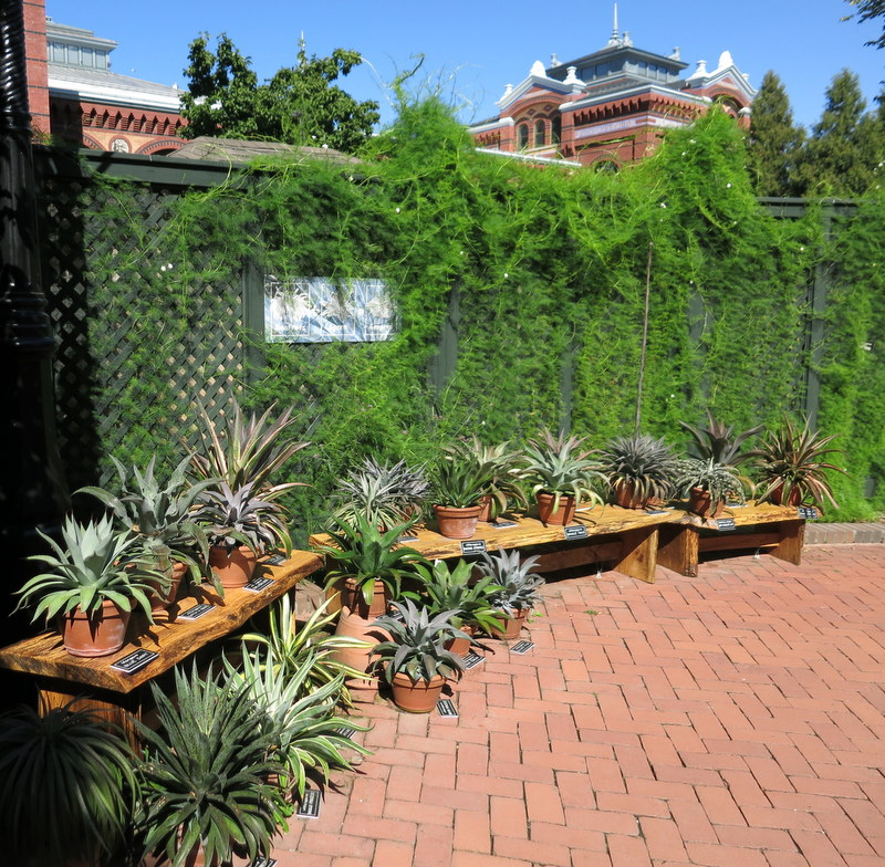 Smithsonian Ripley Garden Sept 2019