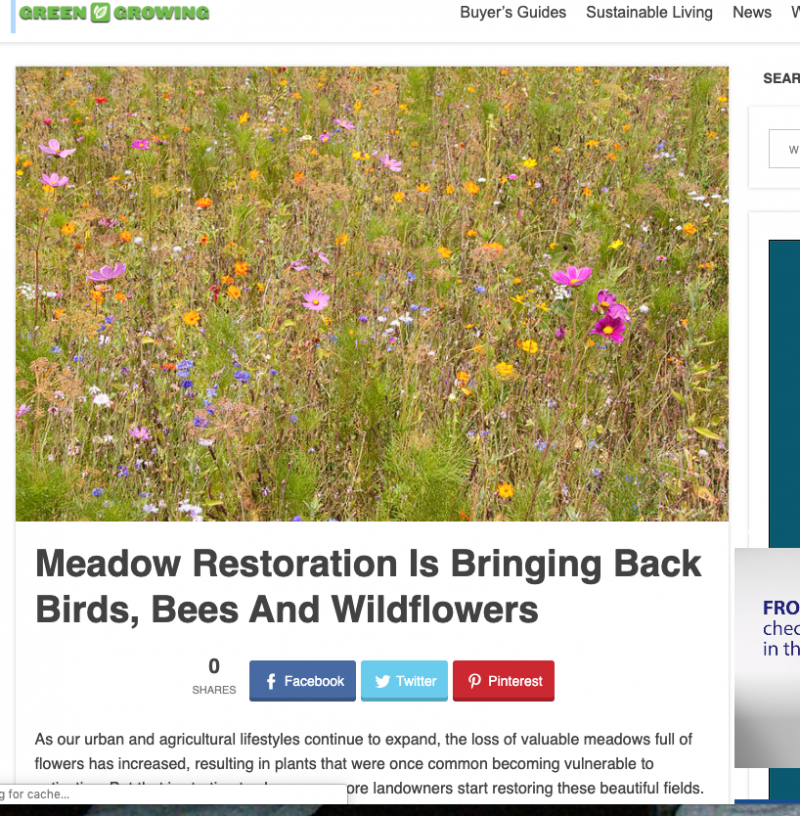 Screen Shot 2019 09 17 at 9.05.56 AM - What butterflies, bees, and clickbait have in common