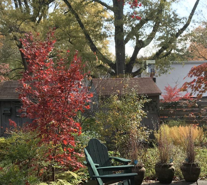 Comment Se Débarrasser Des Fourmis Dans Ma Maison feuillage d'automne, dans une maison de ville jardin