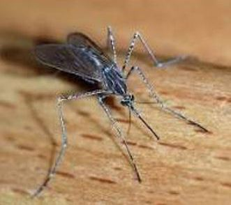 helen3 - Mosquito Control – Is There Really Such a Thing?