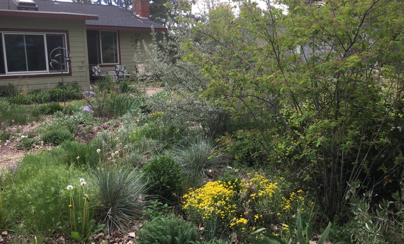 Boise, Idaho garden