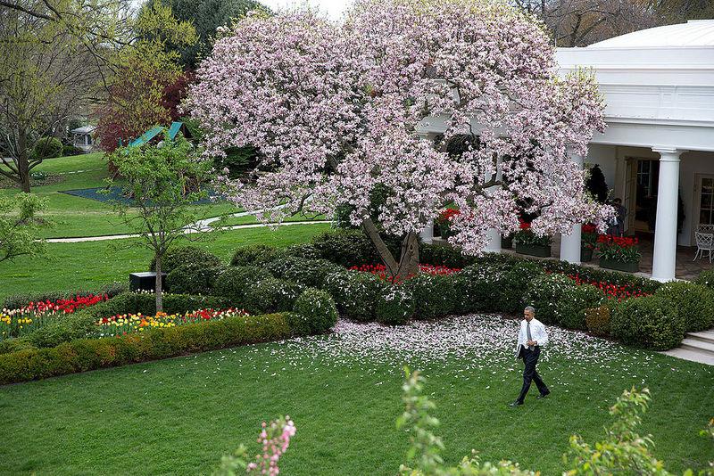 Even Garden Writers Who Hate Trump Are Defending The Rose Garden Upgrade Gardenrant