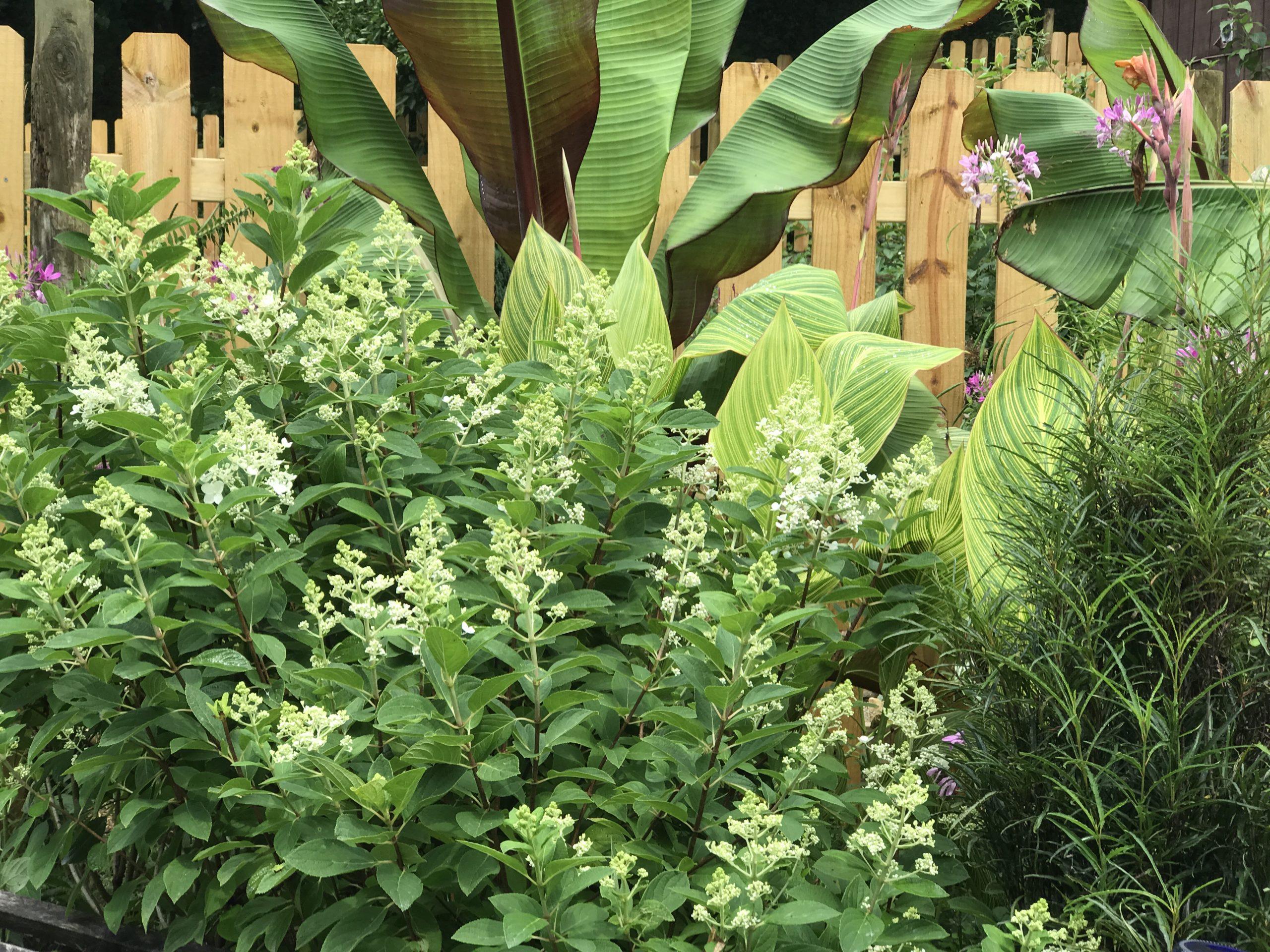 tropicals in garden