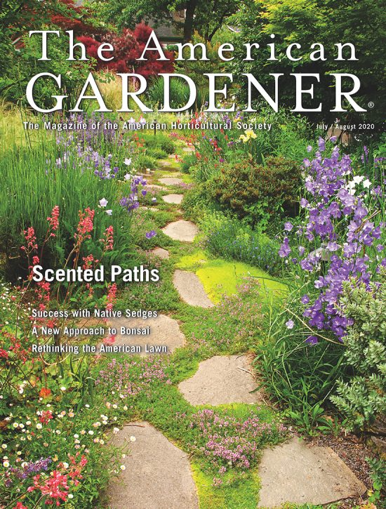 The American Gardener In Defense of The Lawn