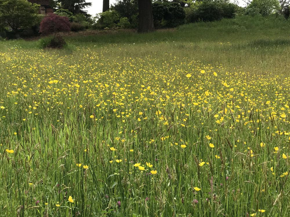 wisley meadow
