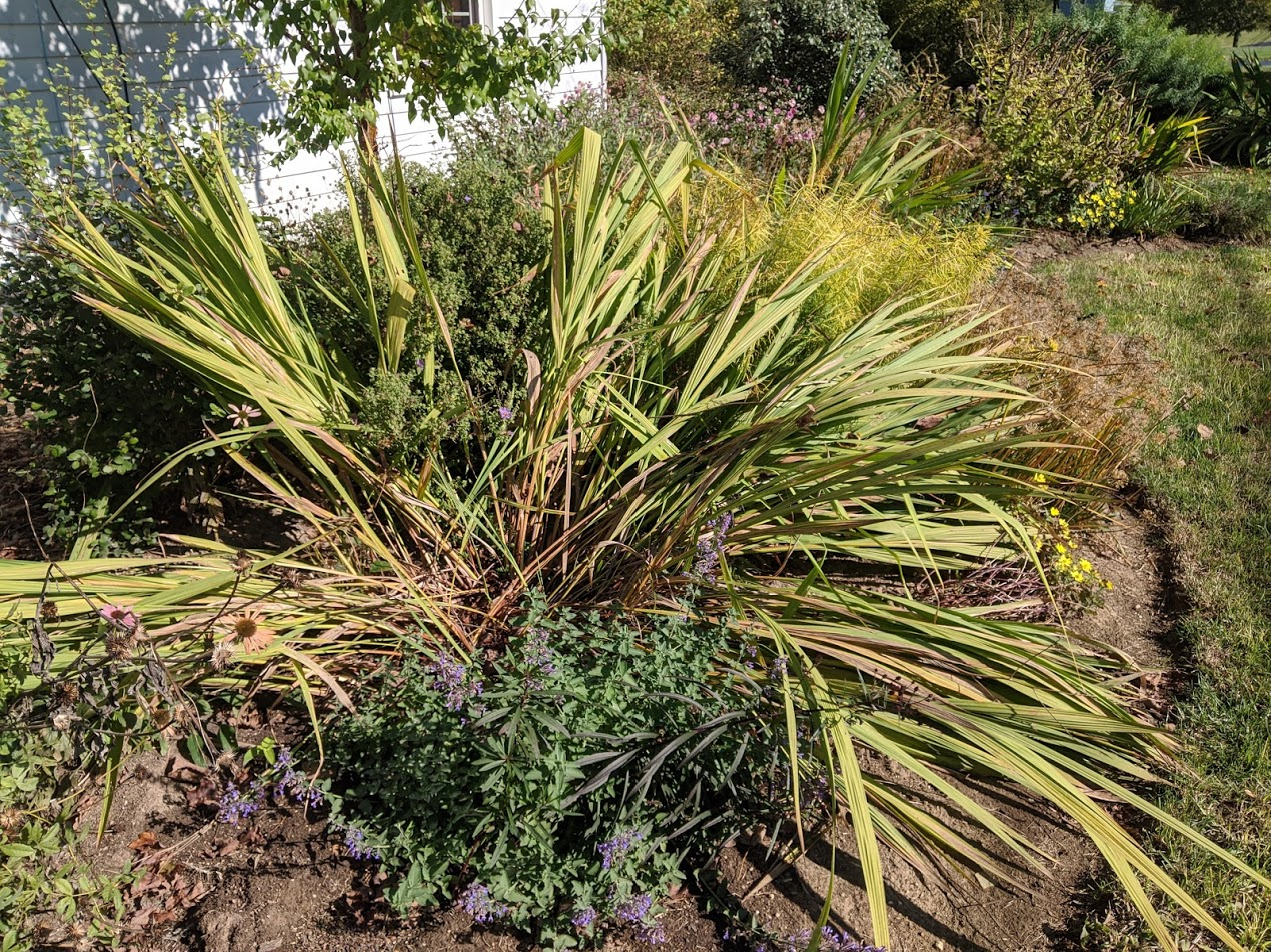 Finding and Fixing Our Gardens' Many Flaws. Now Is the Time! - GardenRant