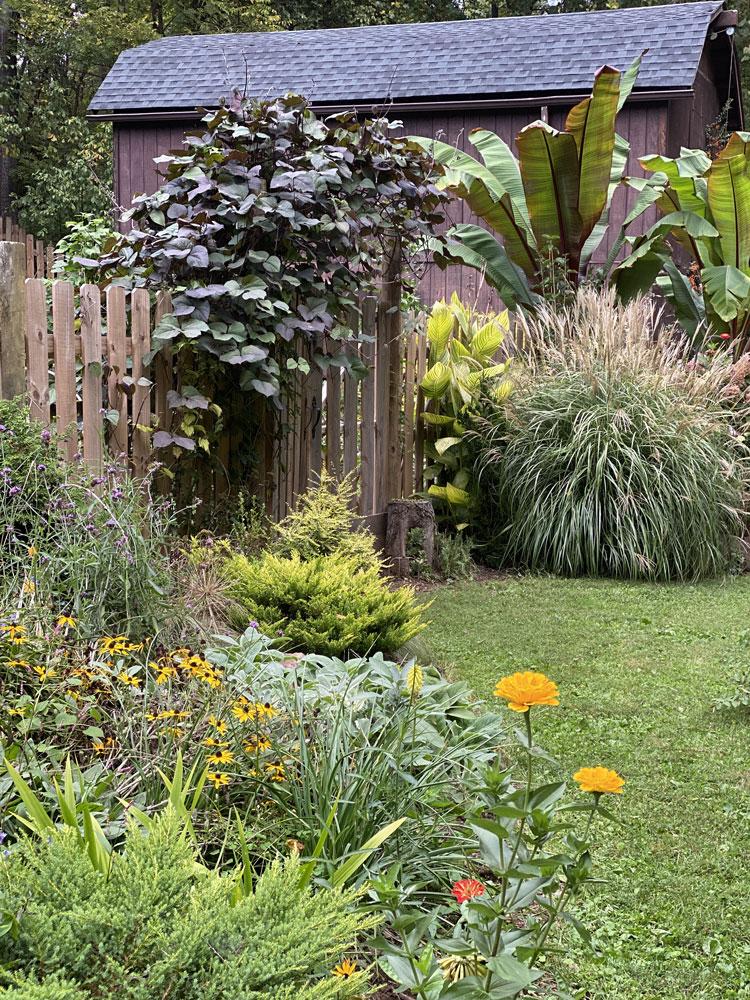 young autumn garden