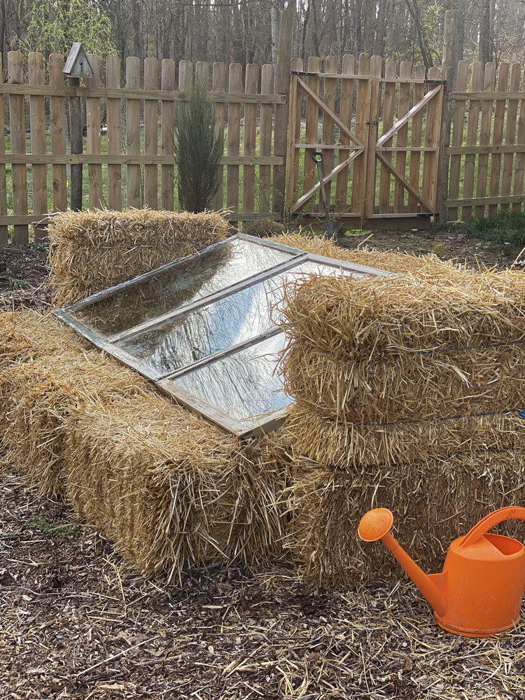 straw bale cold frame for canna and subtropicals