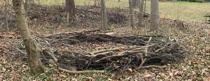 woodland nest